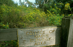 When Friends began restoration work at the Ecology Study Area in 1998, the site was filled with broom, periwinkle, and acacia and eucalyptus trees.