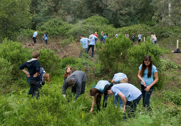 Marin Catholic High School students helped us remove invasive plants from the Ecology Study Area