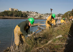 The North Bay Conservation Corps worked with Friends for nine years, digging out and hauling away non-native cordgrass.
