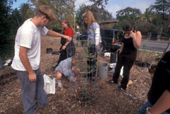 In 1997 Friends and Drake High School students planted the first oaks in our restoration project along Sleepy Hollow Creek, on the school campus.