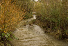 Fairfax Creek at Olema Road