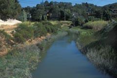 Larkspur Creek Restoration